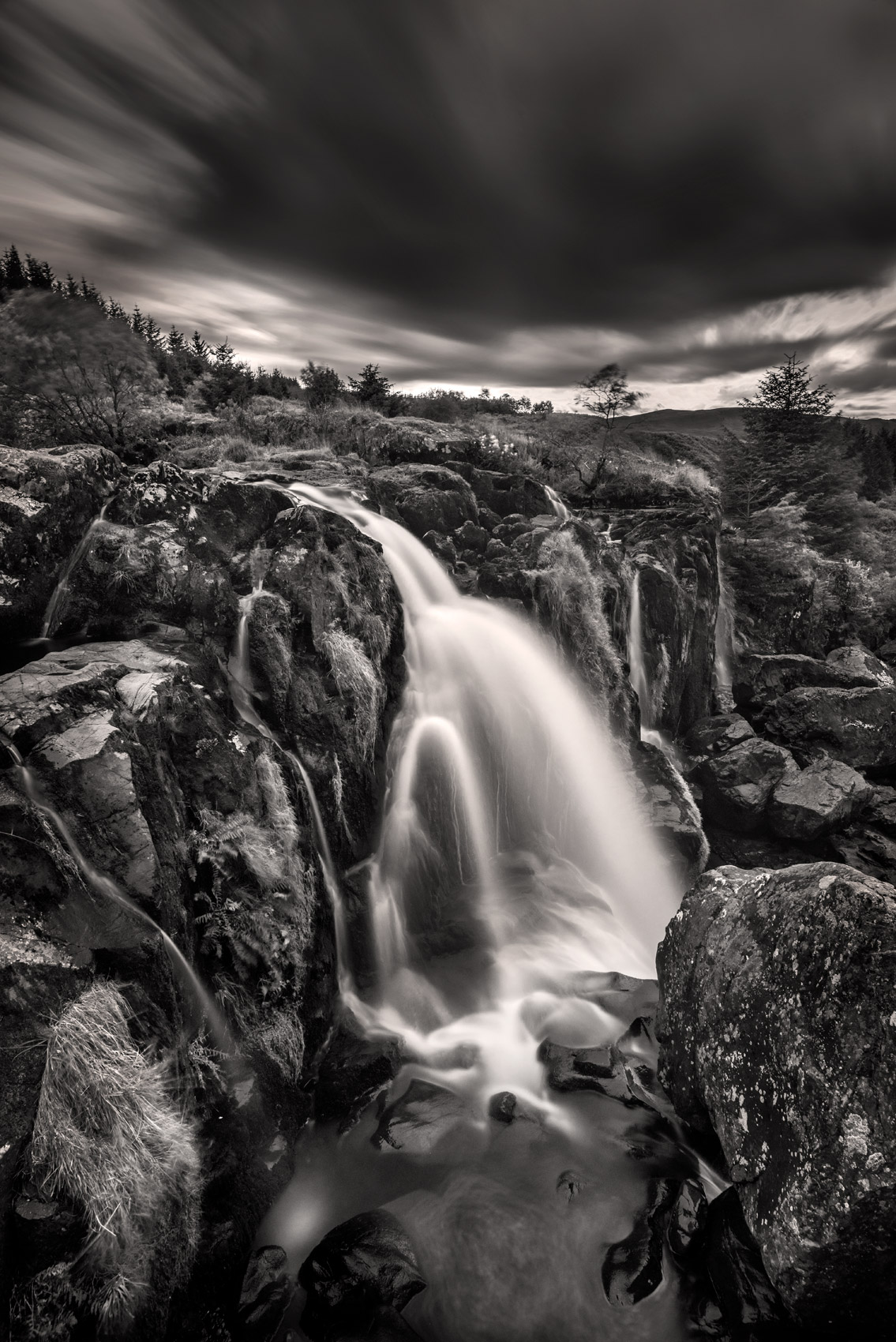 Loup-of-Fintry-8101854
