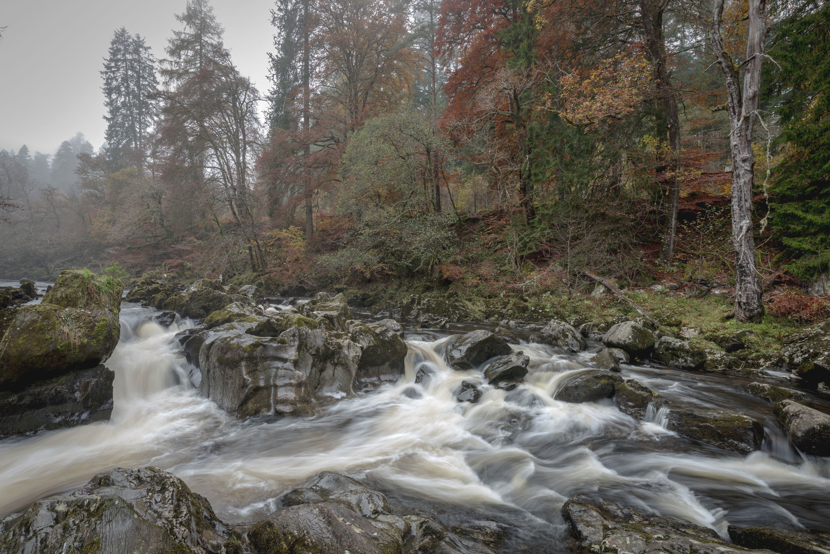 The-Hermitage---Perthshire-8103653