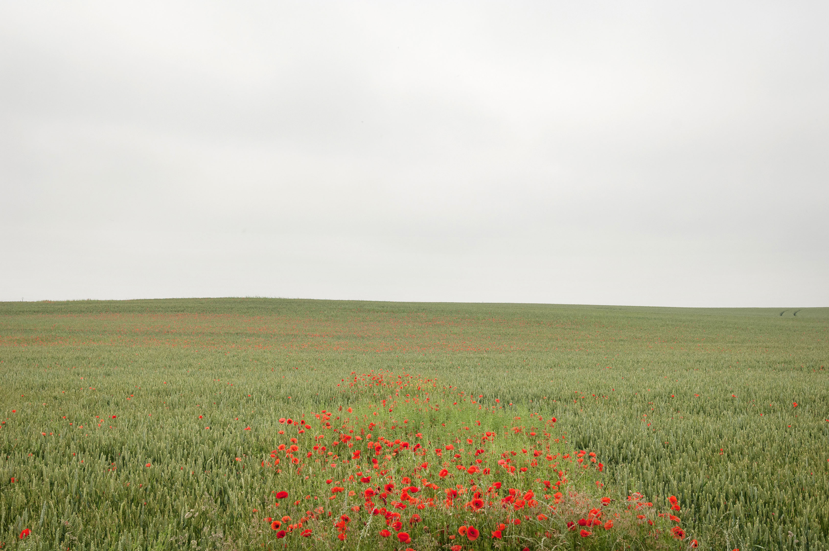 The Somme-CCP6271